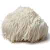 Mushroom Remedy - Lion's Mane